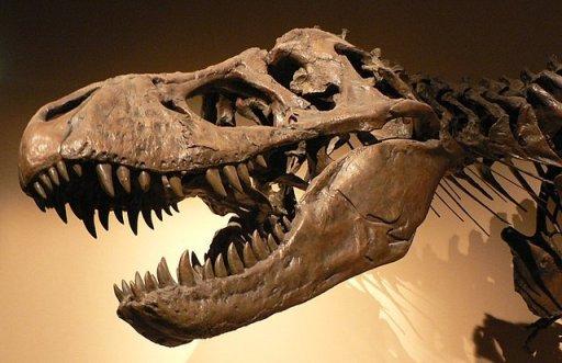 Tyrannosaurus rex, Palais de la Découverte, Paris permineralized fossil.