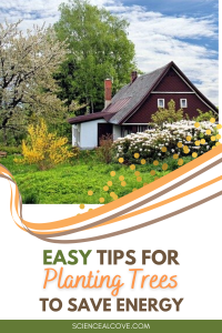 Easy Tips for Planting Trees to Save Energy
