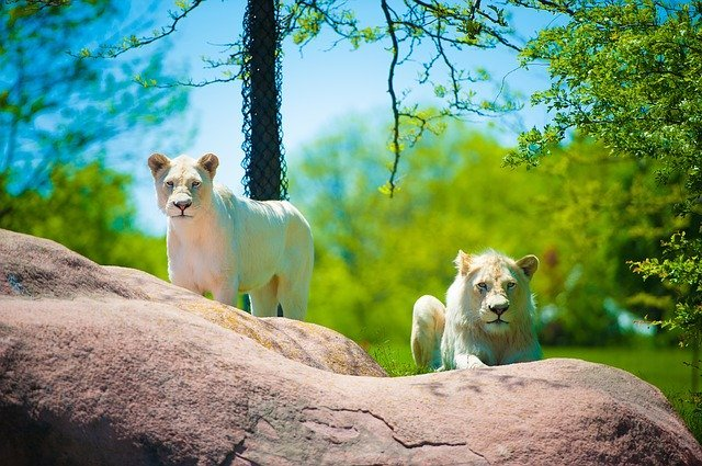 Visit a zoo during holidays to encourage science