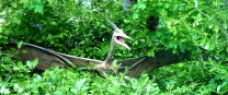 Brecons Pterodactyl, out of the trees! by Les Haines. Flickr. (CC BY 2.0)