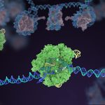 Cas 9 - Image: Innovative Genomics Institute