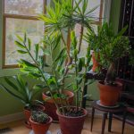 wild houseplants in your home