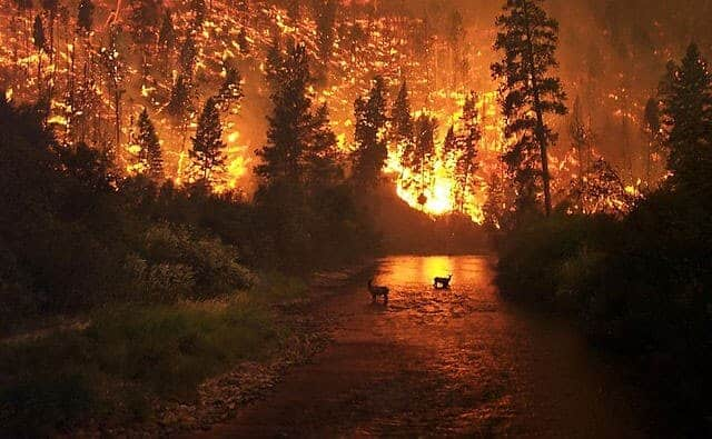 Humans Responsible for More Wildfires than Lightning, Longer Fire Season and Expansion of 'Fire Niche'