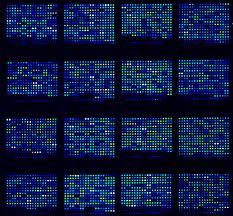 Small microarray grows 1,200 individual cultures of microbes