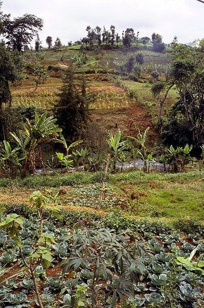 Report: Climate change to shift Kenya's breadbaskets