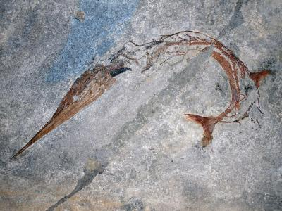 Fish Fossil Shows New Evolutionary Mechanism