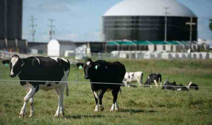 Eating beans instead of beef would sharply reduce greenhouse gasses