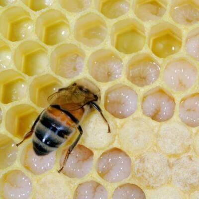 Common crop pesticides kill honeybee larvae in the hive