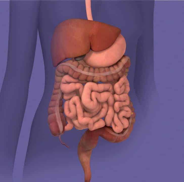 Researchers Find Genetic Clue to Irritable Bowel Syndrome