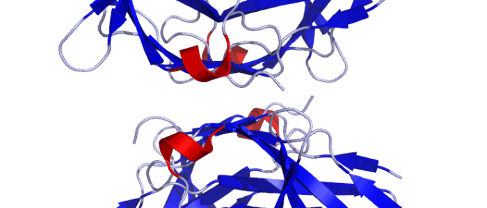 New mechanism for unleashing immune system against cancer