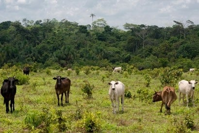 Brazilian cattle ranching policies can reduce deforestation