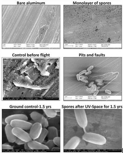 Earth's hardy little space travelers could colonize Mars