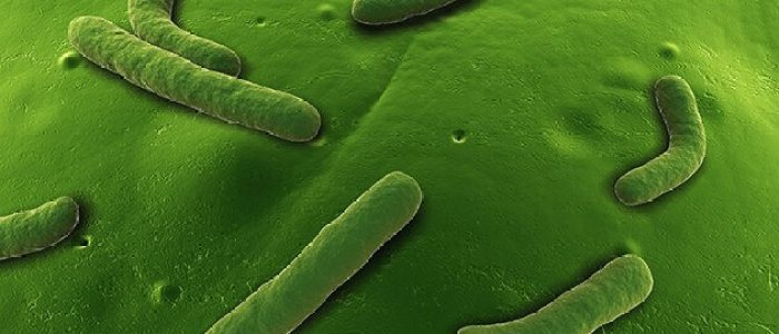 Near instantaneous evolution discovered in bacteria