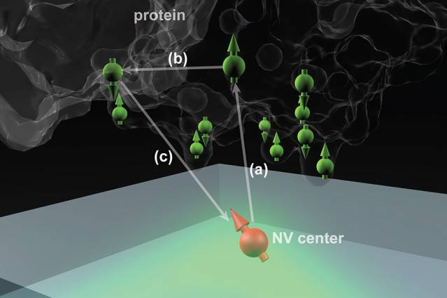 Diamonds could help bring proteins into focus