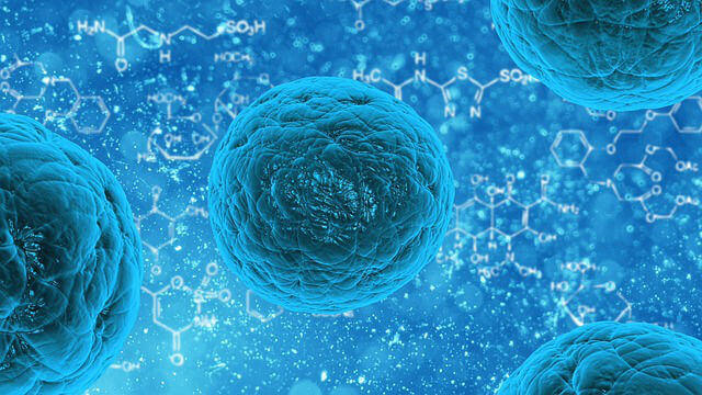 Stem cells collected from fat may have use in anti-aging treatments