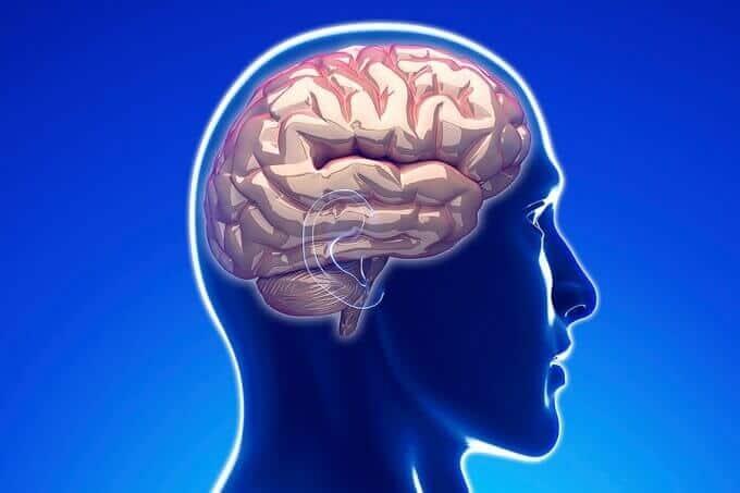 Adult Neurons 66