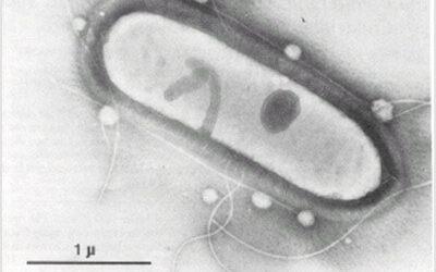 Biological wizardry ferments carbon monoxide into biofuel