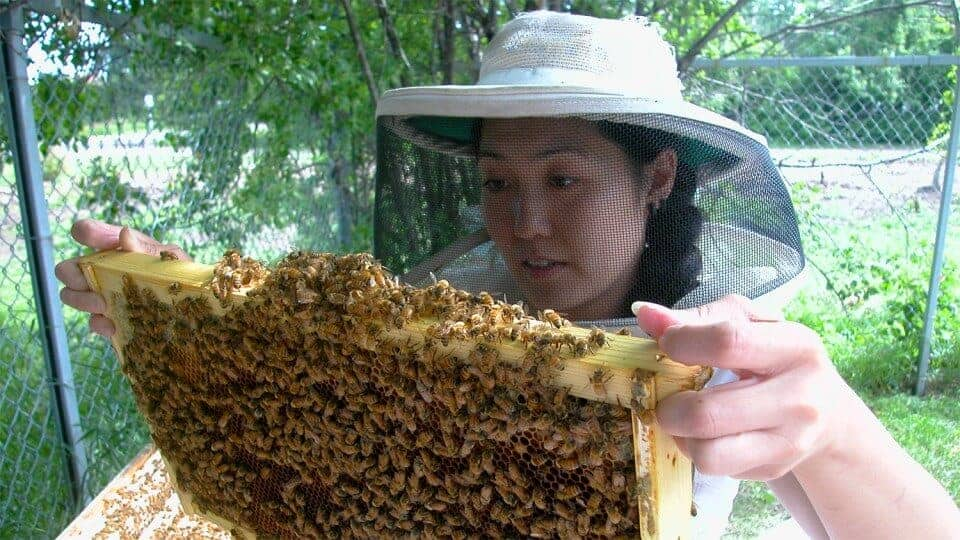 Study finds insecticide hurts queen bees' egg-laying abilities
