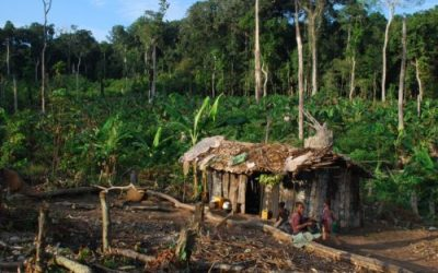 The fight against deforestation: Why are Congolese farmers clearing forest?