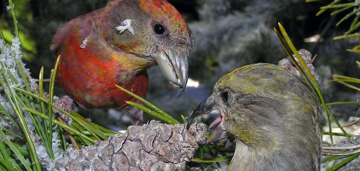 Biologists identify evolving new bird species in southern Idaho using genomics