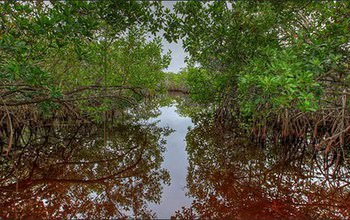 everglades-mangroves-nps_f