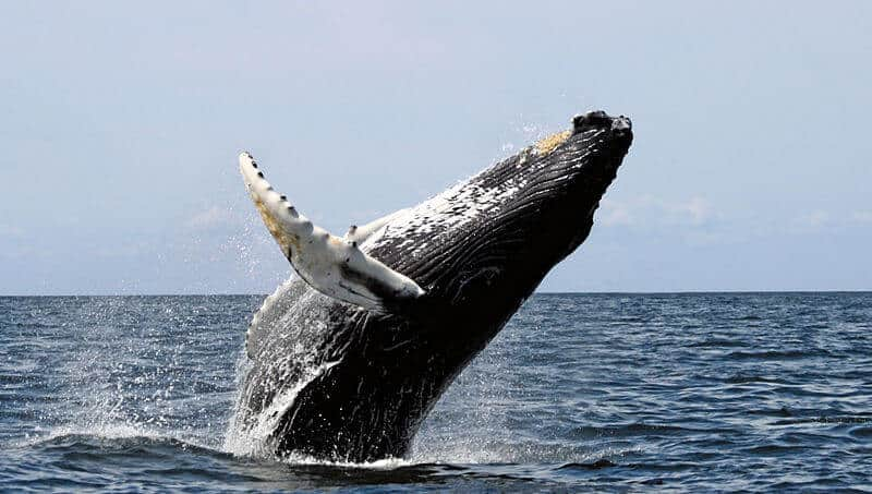 New, complex call recorded in Mariana Trench believed to be from baleen whale