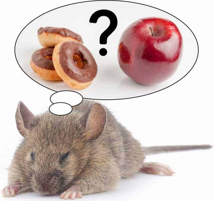 Direct link between REM sleep loss and the desire for sugary and fatty foods discovered