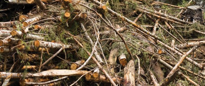 Economics of forest biomass raise hurdles for rural development