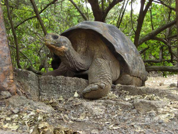 Studying the distant past in the Galápagos Islands