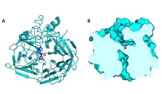 New crystallography finding benefits bioenergy industry