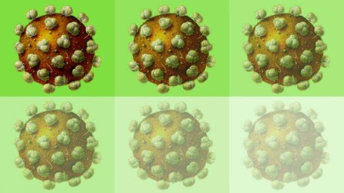 'On-off switch' brings researchers a step closer to potential HIV vaccine