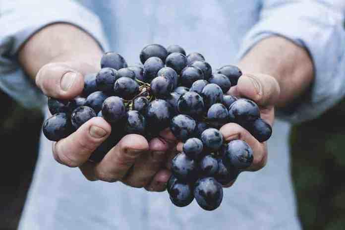 Grape-based compounds kill colon cancer stem cells in mice
