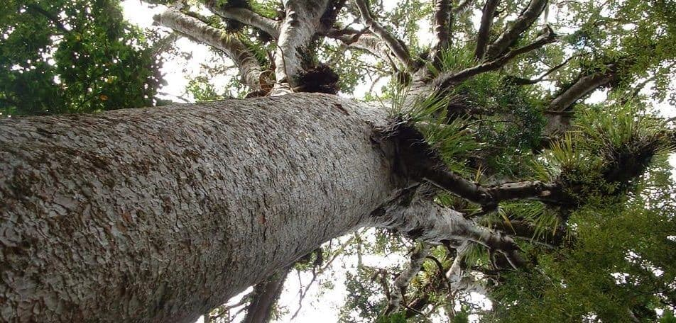 Ancient tree reveals cause of spike in Arctic temperature
