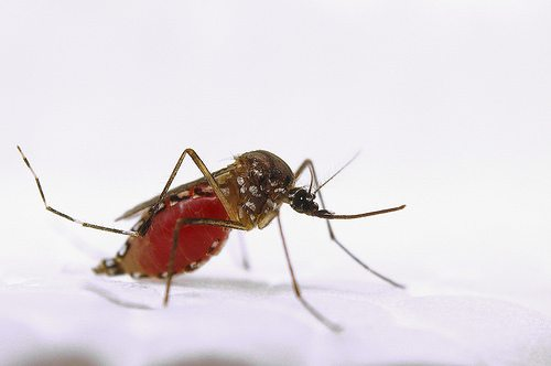 Barbecue-Crashing Mosquitoes Beware: New Weapons Are in the Works