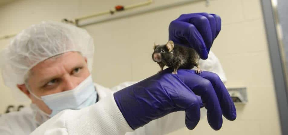 Mouse Study Shows a Ketogenic Diet Increases Longevity, Strength