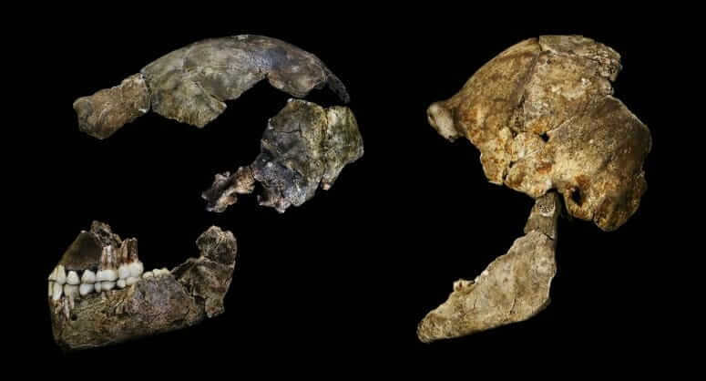 Homo naledi had a tiny brain but it looked a lot like ours
