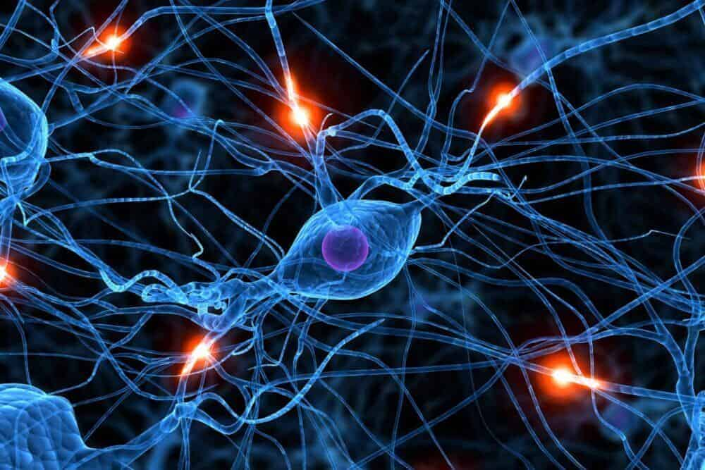 New research finds key players in MS progression