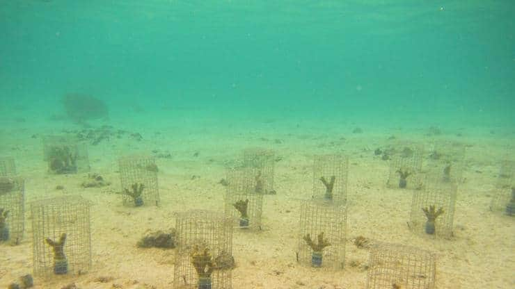 "Previously Overlooked ""Coral Ticks"" Weaken Degraded Reefs"