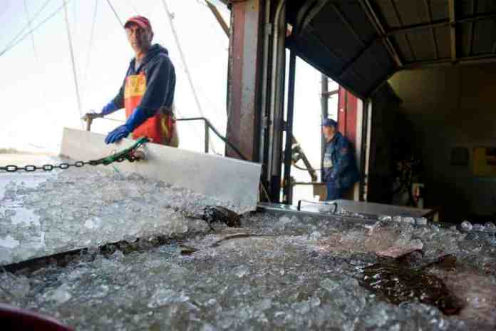 Robots are coming to the seafood industry. Here's why.