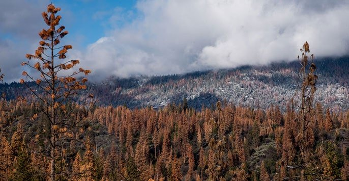 Can our forests survive the next drought?