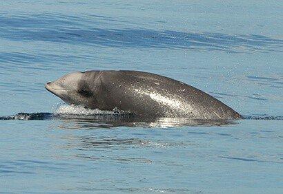 Why beaked whales return to Navy sonar range despite frequent disturbance