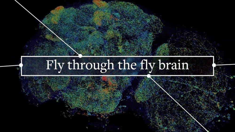 Thanks to rapid, 3D imaging, anyone can tour the fly brain