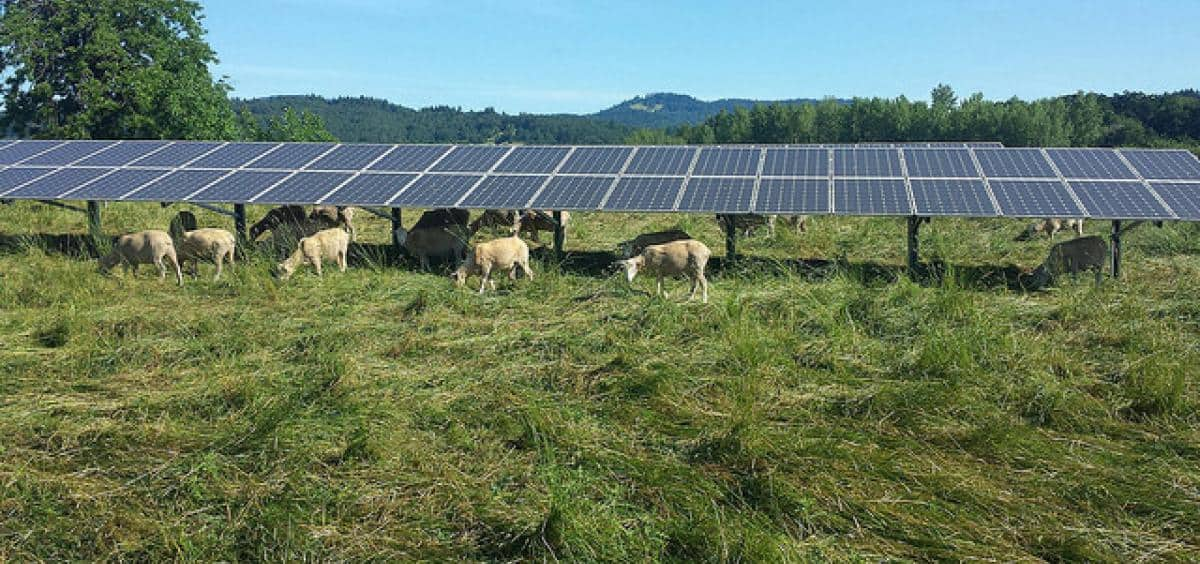 Solar Panels on Farmland Have Huge Electricity-Generating Potential