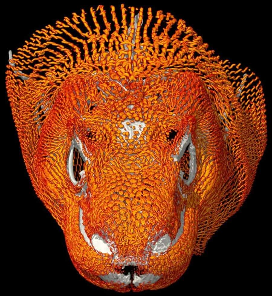 Elaborate Komodo dragon armor defends against other dragons