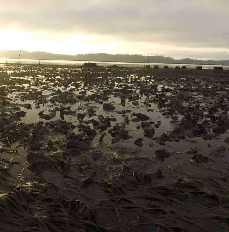 Tides don't always flush water out to sea