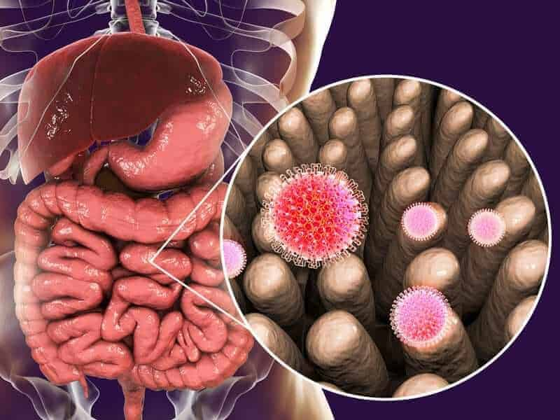 Gut Bacteria Can Prevent And Cure Rotavirus Infection