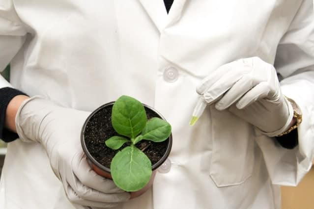 Making real a biotechnology dream: nitrogen-fixing cereal crops