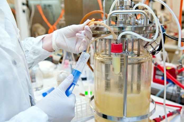 Lab yeast