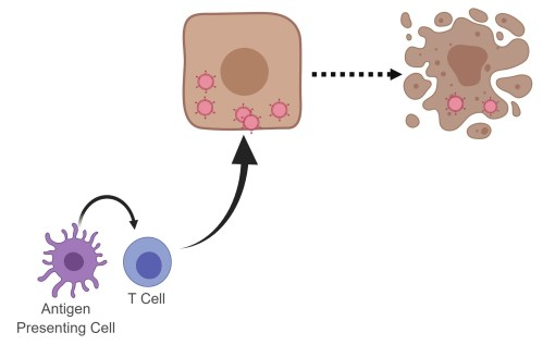 apc-tcell