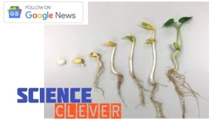 https://scienceclever.com/how-does-a-seed-grow-into-a-plant-step-by-step/